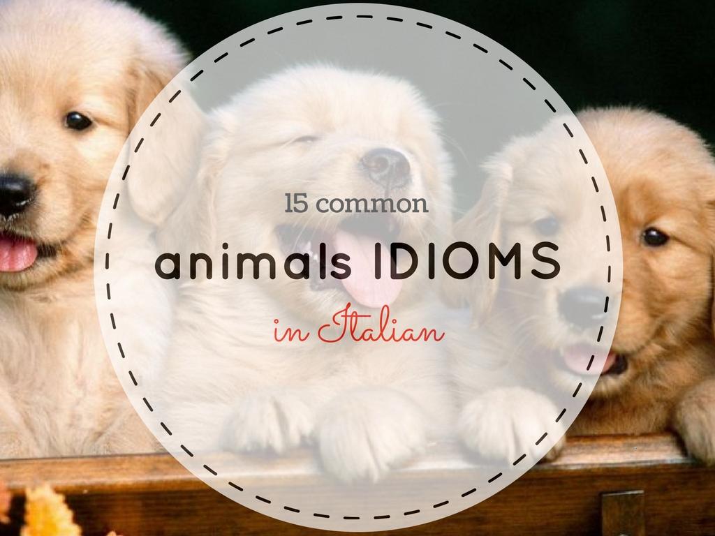 15 popular Italian idioms with animals